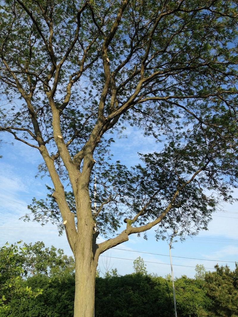 Tree #10